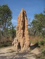 Cathedral Termite Mound, by flickr.com/brewbooks